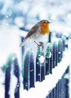 Good Morning Happy December More Le 3 décembre it snow ! Pretty Birds, Love Birds, Beautiful Birds, Animals Beautiful, Cute Animals, Snow Scenes, Winter Scenes, Animals Tattoo, Happy December