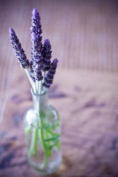 *•.¸¸¸.•*¨*•☆☆ Lavender Bouquet ☆ Cocktail tables will have a bud vase filled with fresh lavender and rosemary...  #lavessence #lavenderbouquet #lavenderflowers