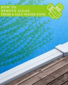 Salt water pool maintenance guide for dummies pool - Saltwater swimming pool maintenance ...