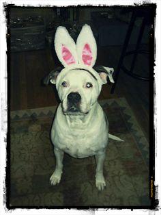 Big Daddy, of www.bigdaddybiscuits.com, is thinking it is Easter.  So darn cute