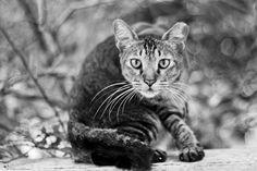Whatcha lookin at? Singapore kitty wannna kno!