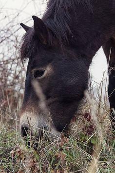 Loveville Photogallery - WILD HORSES - Koně 5.11.2015