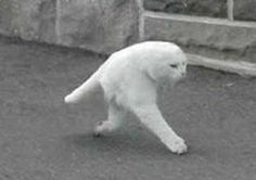 What on earth is this? Che cos'è? Una specie misteriosa? Un esperimento scientifico? Si tratta di un banale errore di Google Street View che per le strade di Ottawa, in Canada, ha fotografato un gatto in modo errato.