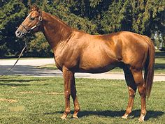 Affirmed - Last Triple Crown Winner and angels great grand daddy