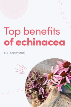 Prevent cold and flu naturally with echinacea, the natural immune booster. Holistic Healing, Natural Healing, Natural Medicine, Herbal Medicine, Prevent Cold, Upper Respiratory Infection, Parts Of A Plant, Naturopathy, Flu