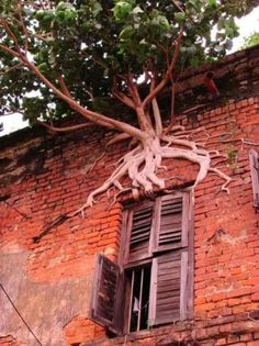 Tree Growing Out Of Side Of Building | See More Pictures | #SeeMorePictures