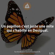 Un papillon c'est juste une mite qui s'habille en Desigual. | Saviez Vous Que? | Tous les jours, découvrez de nouvelles infos pour briller en société !