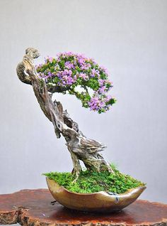 Bonsai is generally a tree or plant that has actually been kept smaller sized than its typical size. The technique to making a bonsai plant is to frequently prune the tree every spring Flowering Bonsai Tree, Indoor Bonsai Tree, Bonsai Trees, Ikebana, Mame Bonsai, Bonsai Artificial, Plantas Bonsai, Miniature Plants, Plant Pictures