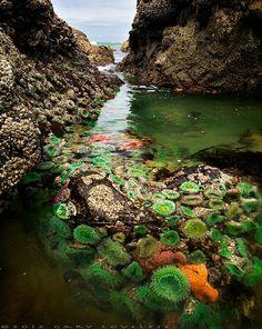 """Neptune's Secret Garden"" at Silver Point, Canon Beach in Oregon; photo by Gary Loveless"