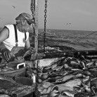 Freedom, Fish And Feds: Alex Villani Of Blue Moon Fish On His Journey From Chelsea's Concrete Jungle To The Open Sea on http://nonabrooklyn.com