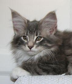 kitte!