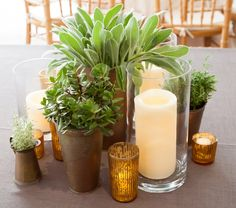 clusters of potted succulents and herbs surrounded by LED pillar candles and gold LED mercury glass votives… www.stemfloral.com www.nicholsphotographers.com www.barrmansion.com