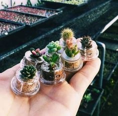 Tiny succulents – Best Home Plants Cacti And Succulents, Planting Succulents, Garden Plants, Indoor Plants, House Plants, Planting Flowers, Propagating Succulents, Cactus Planta, Cactus Y Suculentas