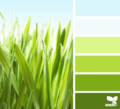 grassy brights Color Palette by Design Seeds Green Accent Walls, Green Accents, Lime Green Walls, Design Seeds, Colour Schemes, Color Combos, Bedroom Green, Green Rooms, Kitchen Colors