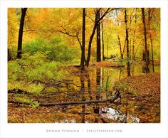 Fall Foliage, Branch Brook Park, Essex County, New Jersey, USA. Phot by Don Peterson.