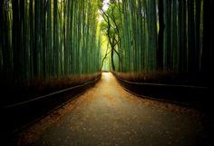 Bamboo forest: oprah.com