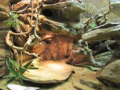 Awesome reptile terrarium.