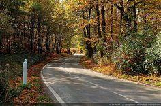 Nom du fichier=route_en_automne-foret_de_montmorency-68.jpg Taille du fichier=2273Ko Dimensions du wallpaper / de la photo HD : 2406x1600 Image ajoutée le : 23 Septembre 2012