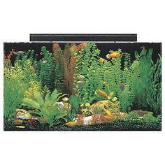 SeaClear Rectangular 50 Gallon Aquarium Combos    Virtually leak and breakproof acrylic aquarium is less than half the weight of a comparably sized glass tank  Internet Sale: $224.75