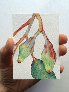 ACEO of Gum tree buds - original miniature watercolour painting by Zoya Makarova