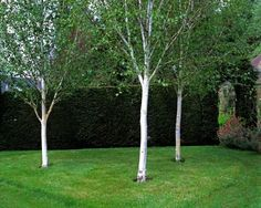 Photo from: Garden Ideas Large, Small Trees For Garden, Garden Trees, Garden Paths, Trees To Plant, Garden Landscape Design, Landscaping Design, Garden Landscaping, Backyard Trees