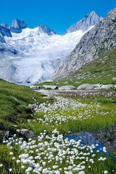 Wildflowers and ice