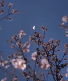 arynlei, creative (@arynlei) • Instagram photos and videos Dandelion, Soft Light, Photo And Video, Creative, Plants, Aesthetics, Beauty, Beautiful, Instagram
