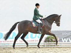 2008 Trakehner stallion Millenium (Easy Game x Merle, Ravel)
