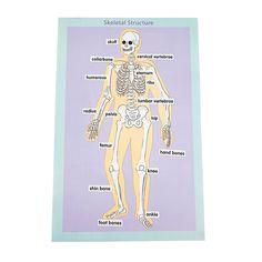 12 Skeletal Human Body Giant Sticker Scenes - OrientalTrading.com