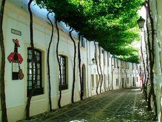 Esta impresionante calle se encuentra en la ciudad de Jerez de la Frontera, provincia de Cádiz, Andalucía. Los árboles están puestos contra ...
