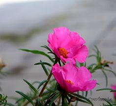 Wonderful flower!