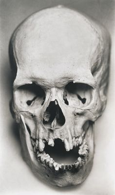 Human skull This is the skull that hamlet holds, I believe it will be a good…