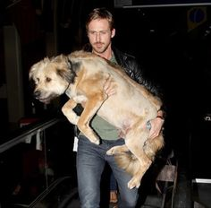 Ekpo Esito Blog: Actor Ryan Gosling shows off his dog in honor of '...