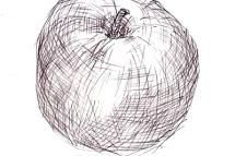 Learn basic drawing, drawing of an apple - H South, licensed to About.com, Inc.