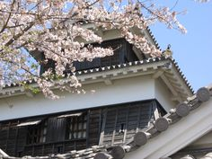 桜 & 熊本城。日本 Kumamoto-jo castle