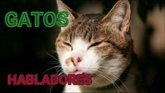 Los gatos mas graciosos del mundo - YouTube Mejor Gif, Cats, Youtube, Animals, World, Pets, Gatos, Kitty Cats, Animaux