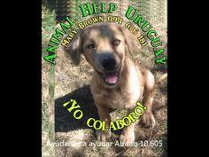Negro ya salió de cuidados intensivos en ANIMAL HELP URUGUAY!!!
