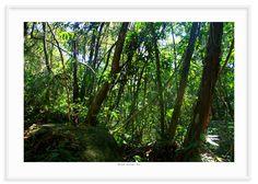 03 - Floresta tropical 1