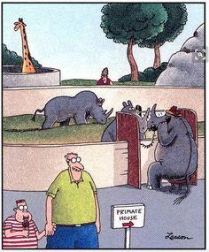 Primate House The Far Side by Gary Larson Far Side Cartoons, Far Side Comics, Funny Cartoons, Gary Larson Comics, Gary Larson Cartoons, Funny Images, Funny Pictures, Cartoon Images, Reaction Pictures