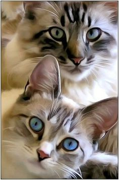 Beauties. -- [REPINNED by All Creatures Gift Shop] #cats #painting