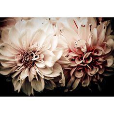 Victorian Pink Flowers Macro Fine Art Photograph on Etsy, $15.00
