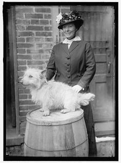 Dog Show 1915 - Looks like an early West Highland White Terrier/Westie