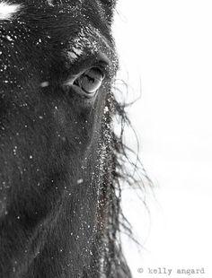 Horse Photograph - black and white horse photography - 8x10 black horse photo, winter horse - eye relflection, nature. $30.00, via Etsy.