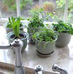 A Guide to an Indoor Herb Garden | eBay #ebayguide