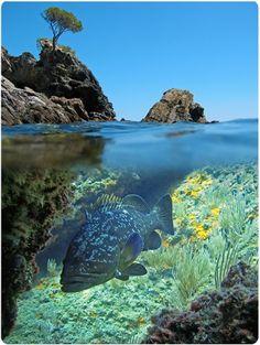 Plongez dans les eaux turquoises et découvrez les espèces marines ! #corse…