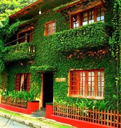 Raintree lodge, Fort Cochin , Kerala , India
