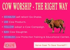 Way To Real Worship Mother Cow
