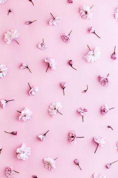 pastel pink wallpaper cherry blossom background by black united pastel pink wallpaper pastel pink wallpaper designs Wallpaper Tumblr Lockscreen, Phone Wallpaper Images, Cool Wallpaper, Pinky Wallpaper, Spring Wallpaper, Wallpaper Designs, Black Wallpaper, Pretty Backgrounds, Flower Backgrounds