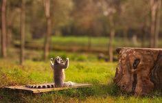 Ces 25 animaux nous montrent comment bien faire du yoga