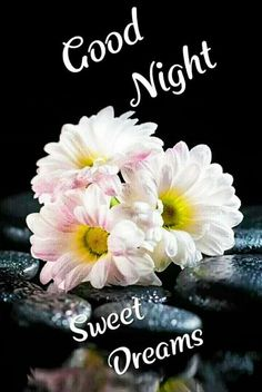 Good Night Flowers, Beautiful Good Night Images, Romantic Good Night, Cute Good Night, Good Night Sweet Dreams, Sweet Night, Good Night Cards, Good Night Greetings, Good Night Messages